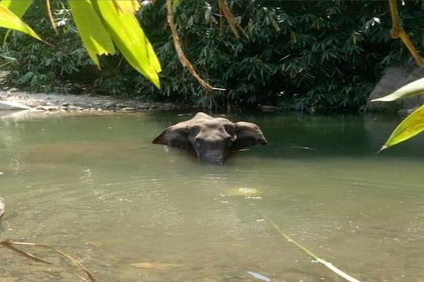 Killing of pregnant elephant with explosive-laden fruit in Mulappuram, Kerala
